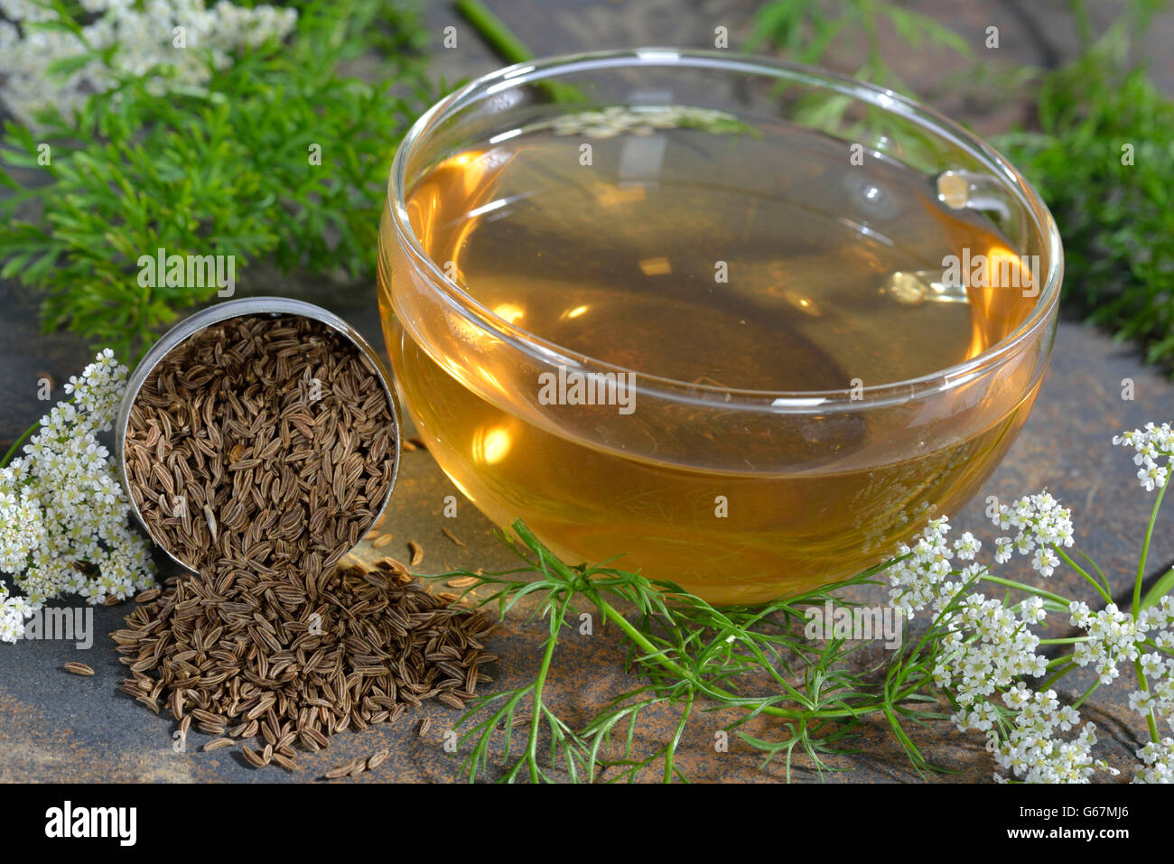 Caraway, meridian fennel, persian cumin / (Carum carvi Stock