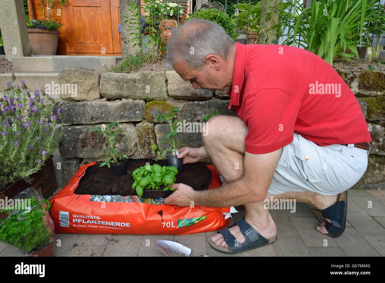 Planting bag of flower soil - Stock Image