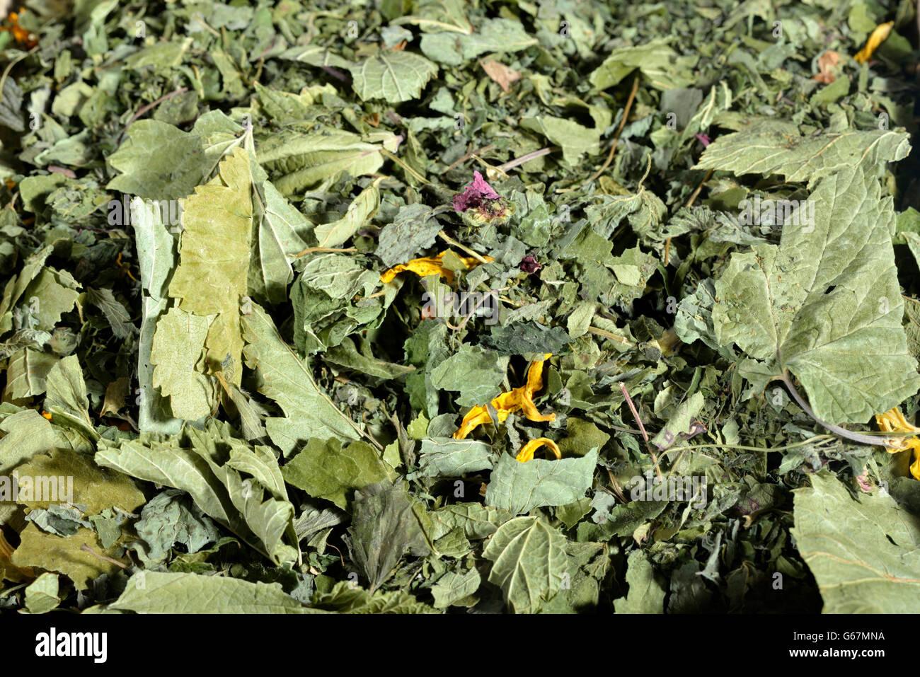 Four seasons tea, blackcurrant, balm, annual sunflower, wild strawberry, woodland strawberry, alpine strawberry, - Stock Image