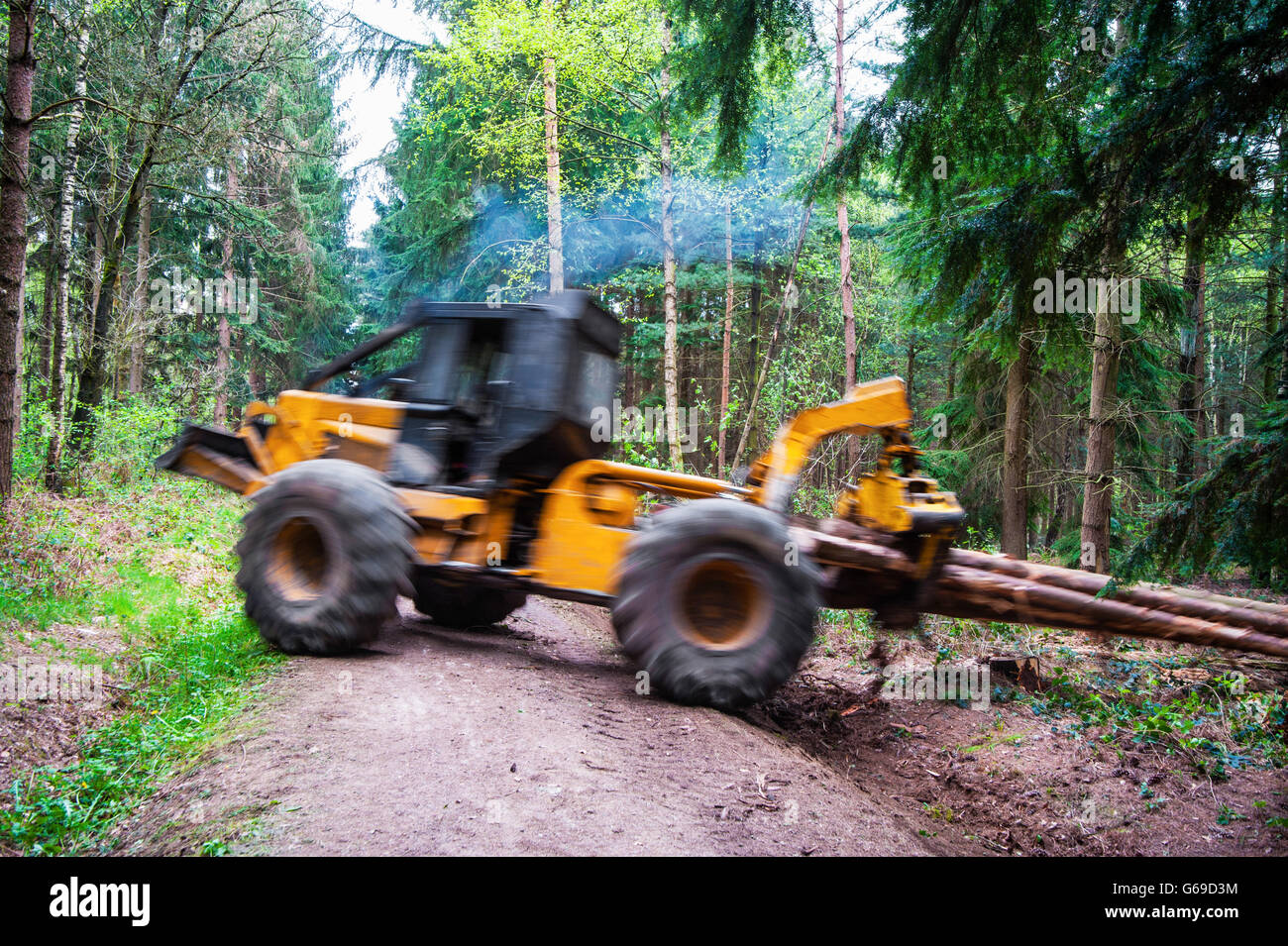Hauling wood in the forest by a grapple skidder, motion of hauling machine and hauled wood blurred - Stock Image