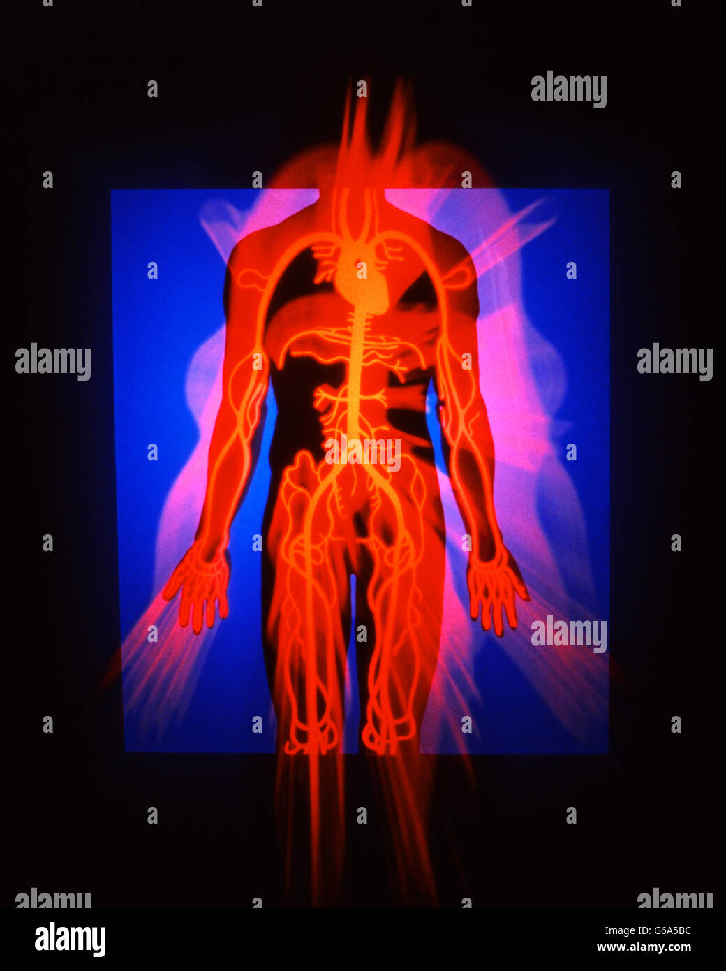 MEDICAL COMPUTER ILLUSTRATION OF HUMAN BODY SHOWING HEART VEINS AND ARTERIES - Stock Image