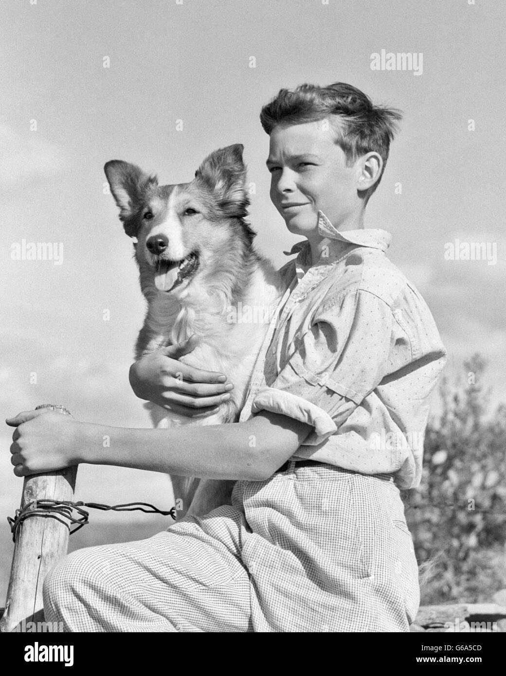 1930s 1940s PORTRAIT BOY SITTING FENCE HOLDING HIS COLLIE DOG PET - Stock Image