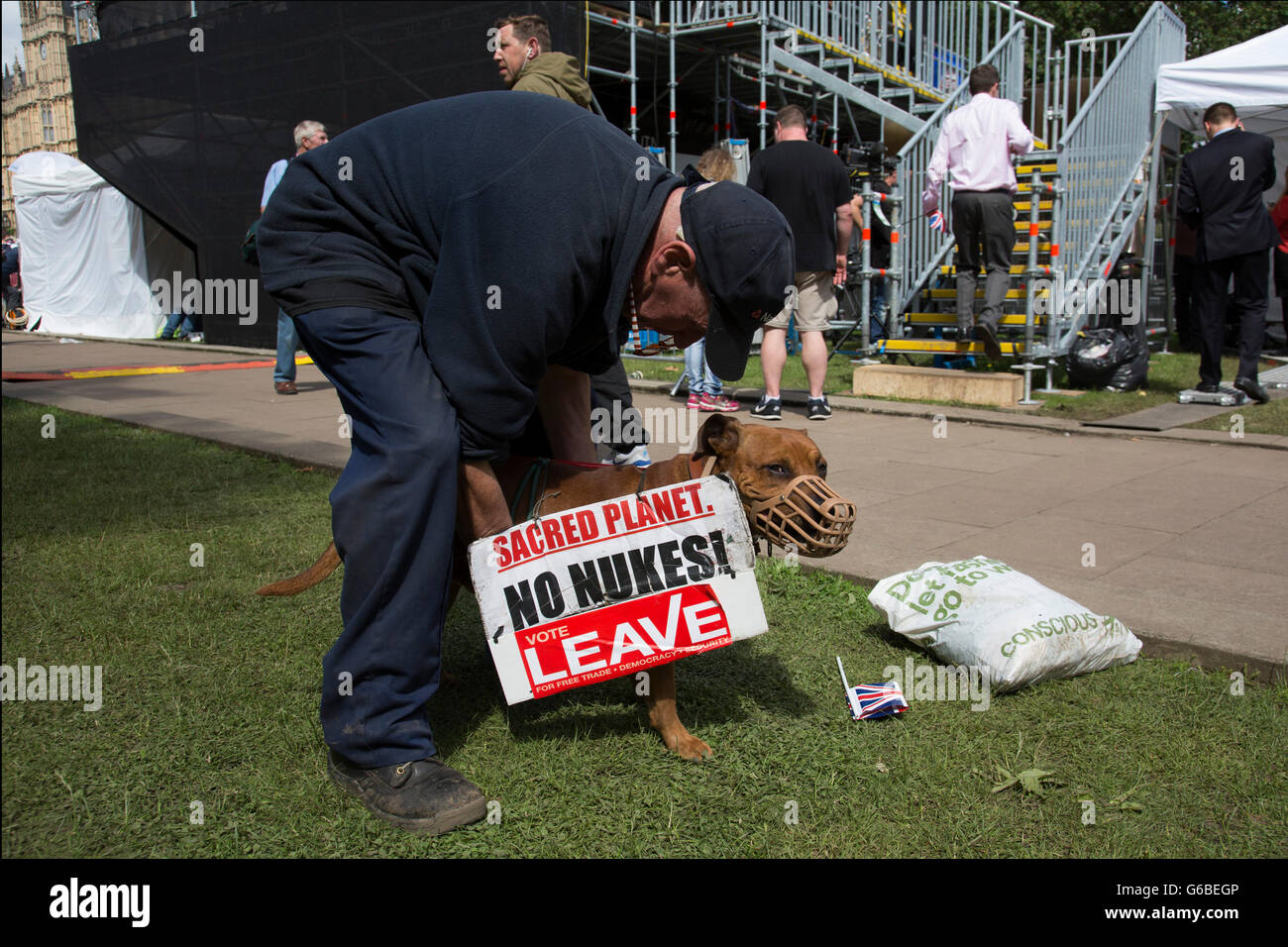 London, UK. 24th June, 2016. Protester and his demo dog gather at College Green in Westminster outside the Houses - Stock Image
