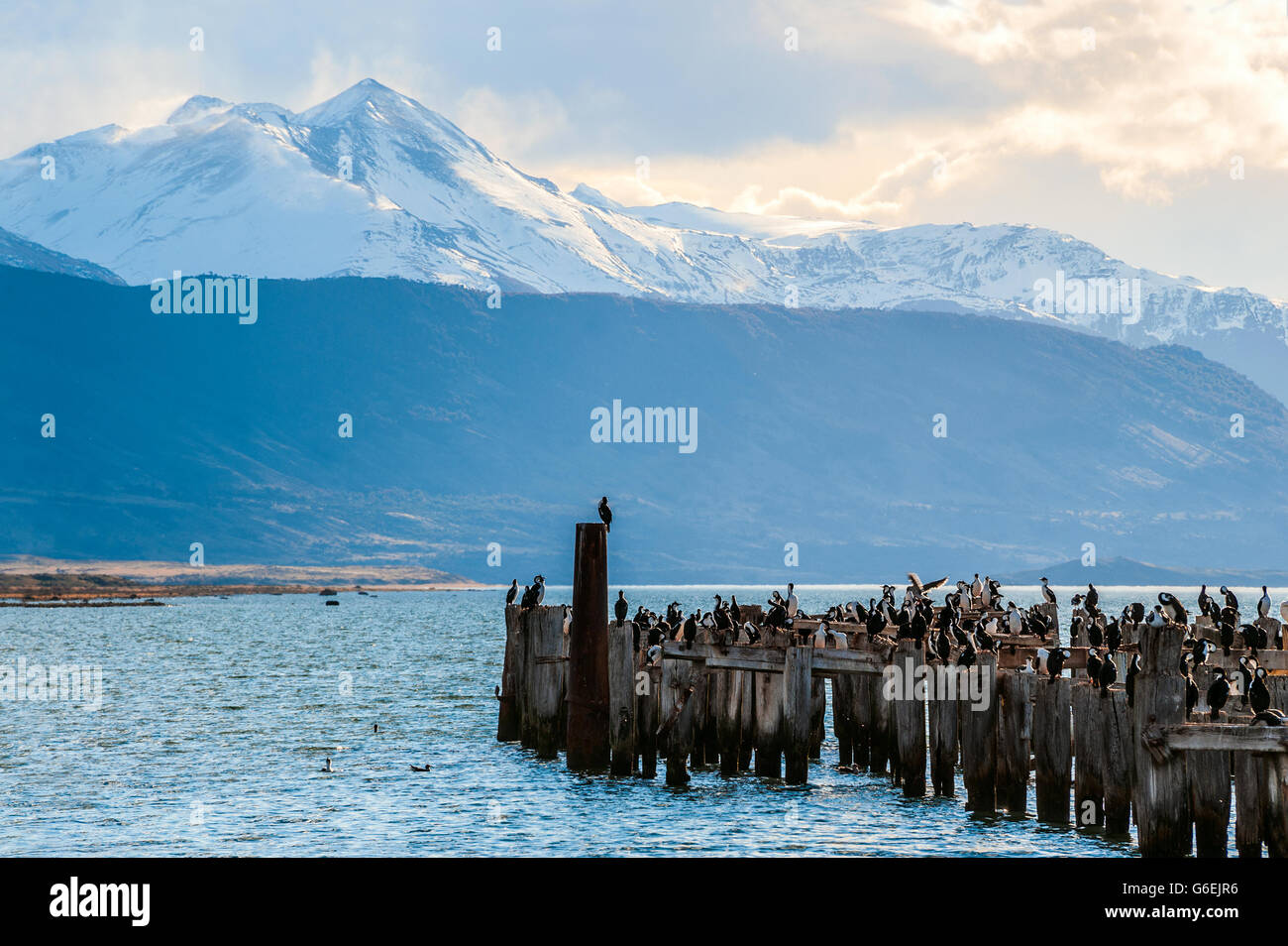 King Cormorant colony, Old Dock, Puerto Natales, Chile - Stock Image