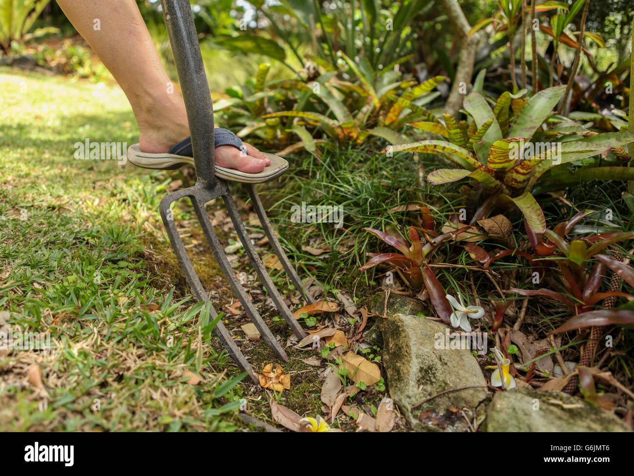 Garden Work Woman Digging Shovel Stock Photos & Garden Work Woman ...