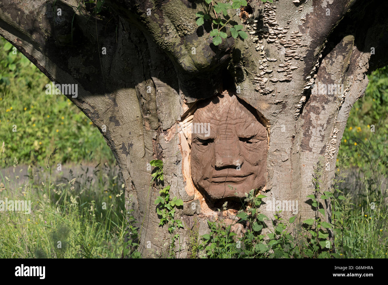 Face in the tree sculpture, Brungerley Park, Clitheroe, Ribble Valley, UK - Stock Image