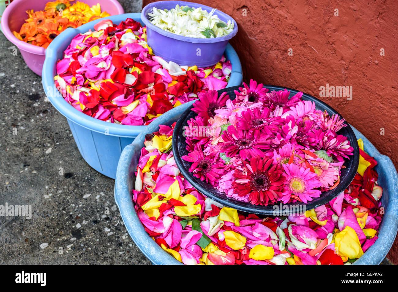 Rose Week Stock Photos & Rose Week Stock Images - Alamy