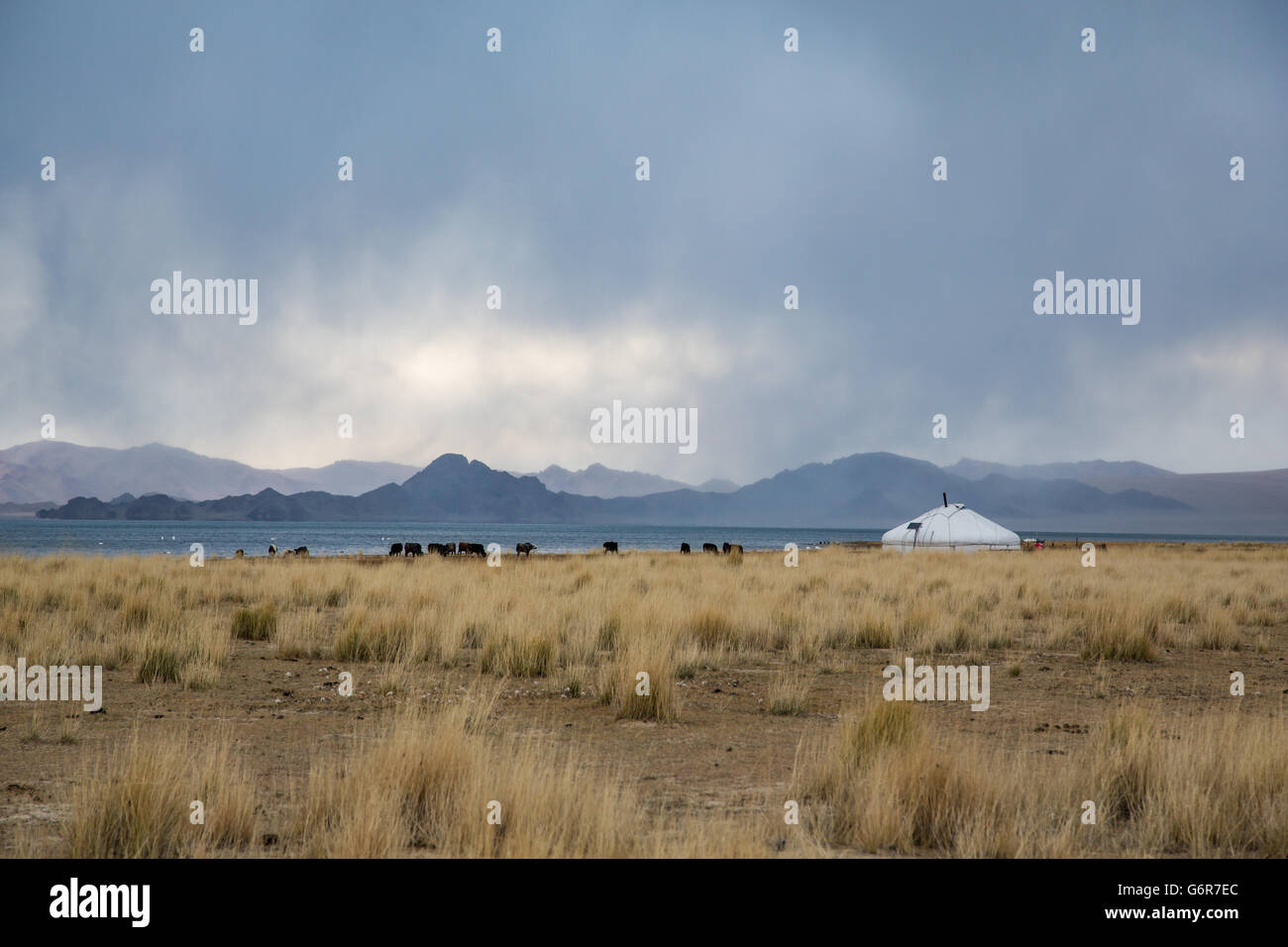 a yurt in a landscape of western mongilia with mountains at the backdrop - Stock Image