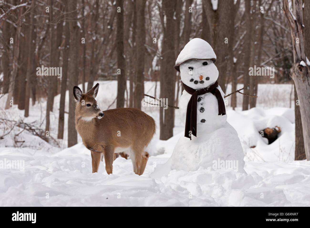 Deer in winter, snowman - Stock Image