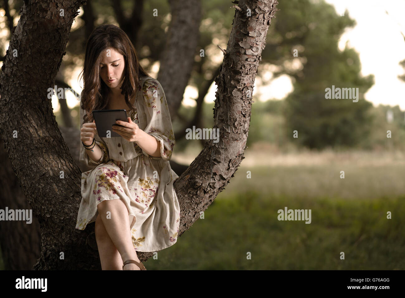 Woman with Tablet Sitting on a Pine Tree in a Park - Stock Image