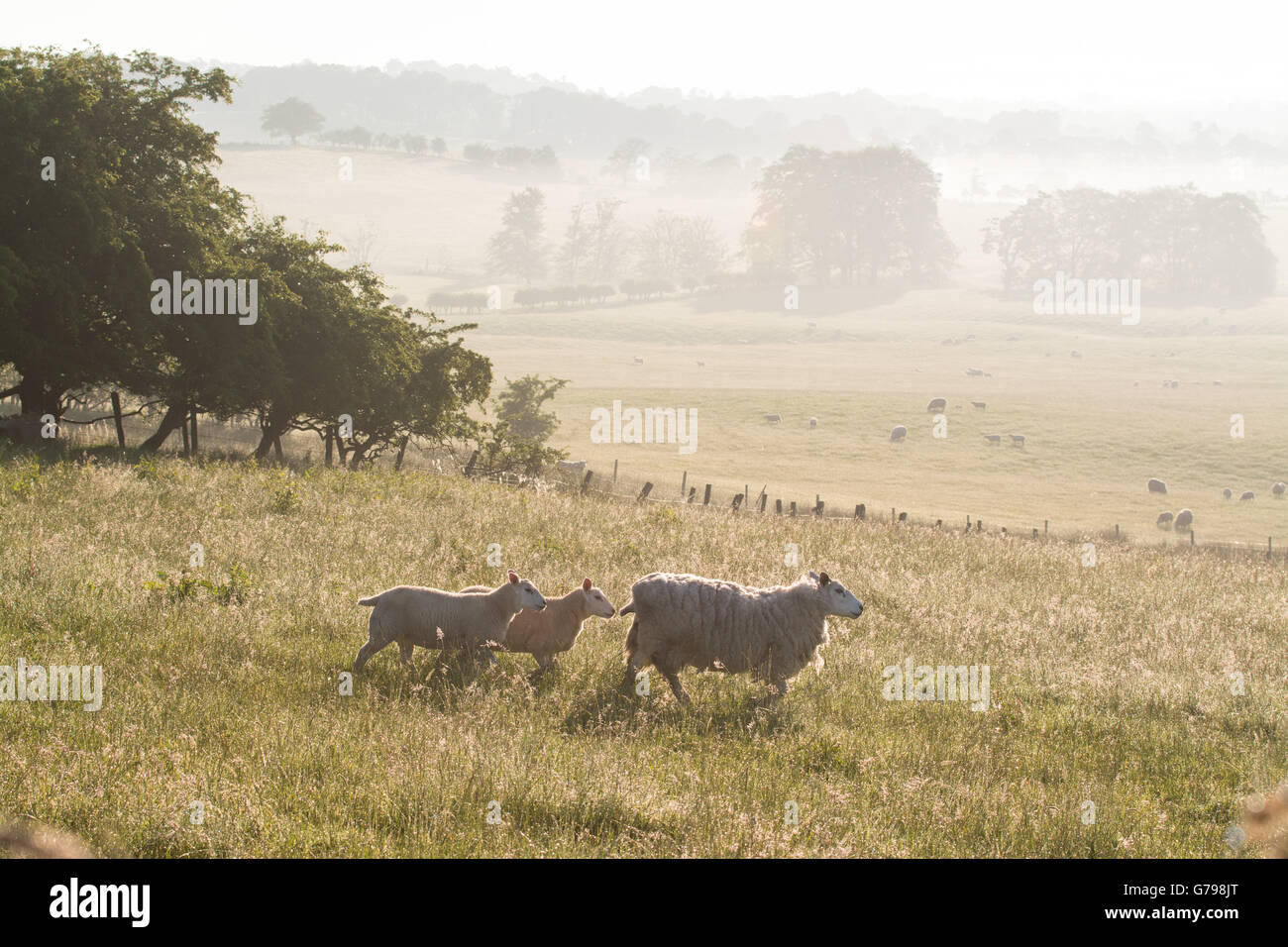 Gartness, Stirlingshire, Scotland, UK - 26 June 2016: UK weather - a beautiful misty start to the day in rural Stirlingshire, - Stock Image