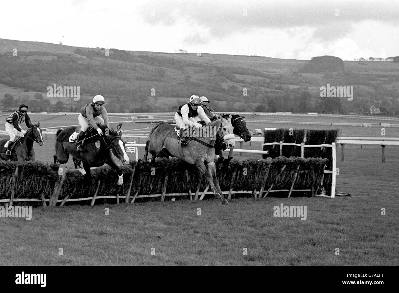 Horse Racing - Rosehill three year old hurdle - Cheltenham - Stock Image