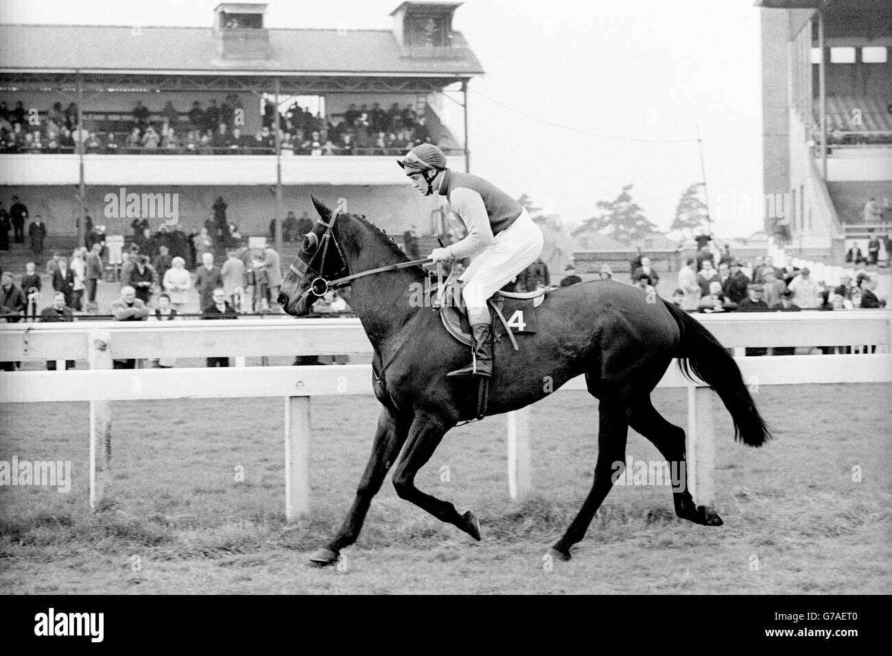 Horse Racing - Mackeson Gold Cup Handicap Chase - Cheltenham - Stock Image