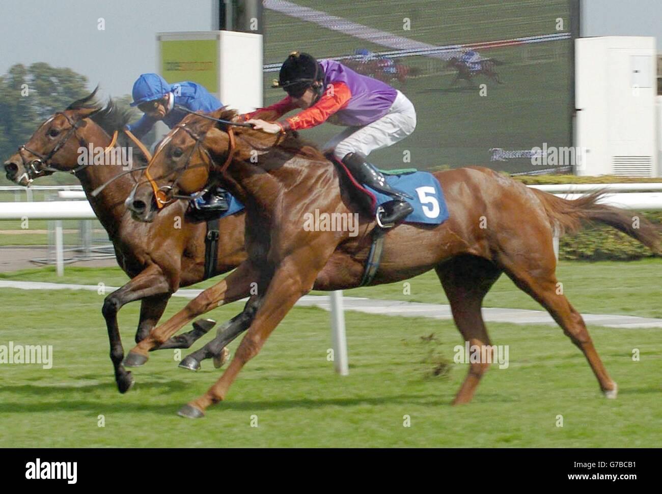 Humerous wins at Kempton - Stock Image