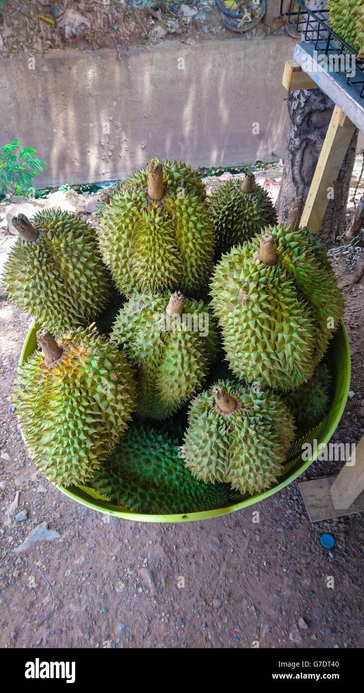 Durian is the king of fruit of Thailand - Stock Image