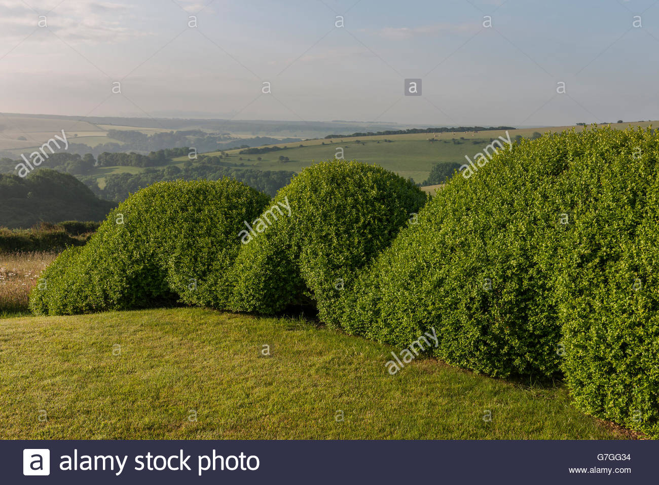 sculptural windbreak hedge - Stock Image