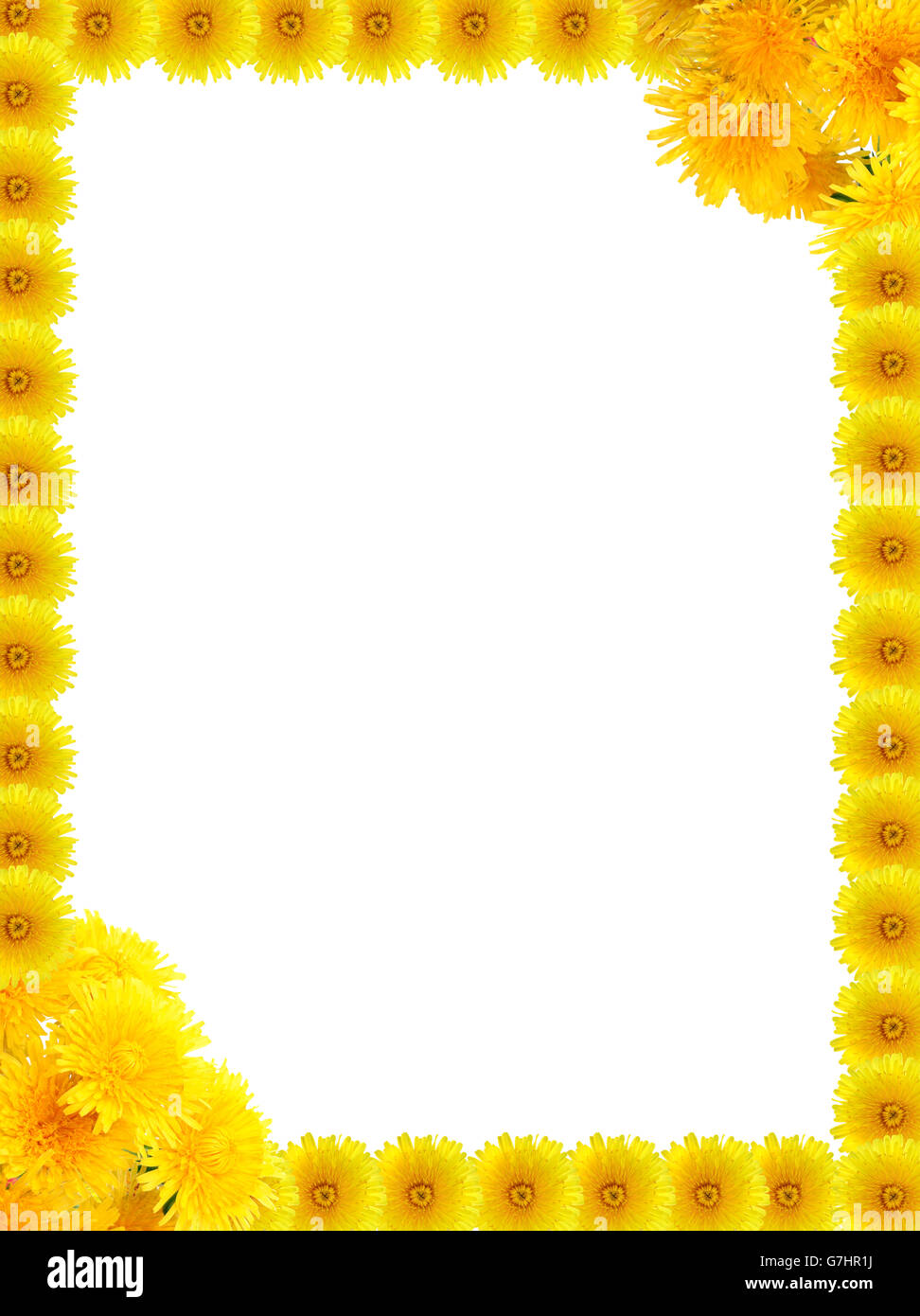Nice frame made from yellow dandelion flowers on white background ...
