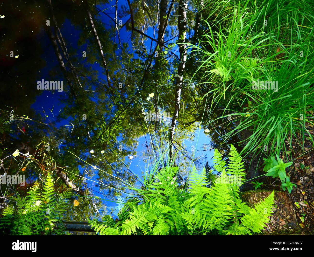 Europe Germany Chiemgau Marshland wetland bog tree lane - Stock Image