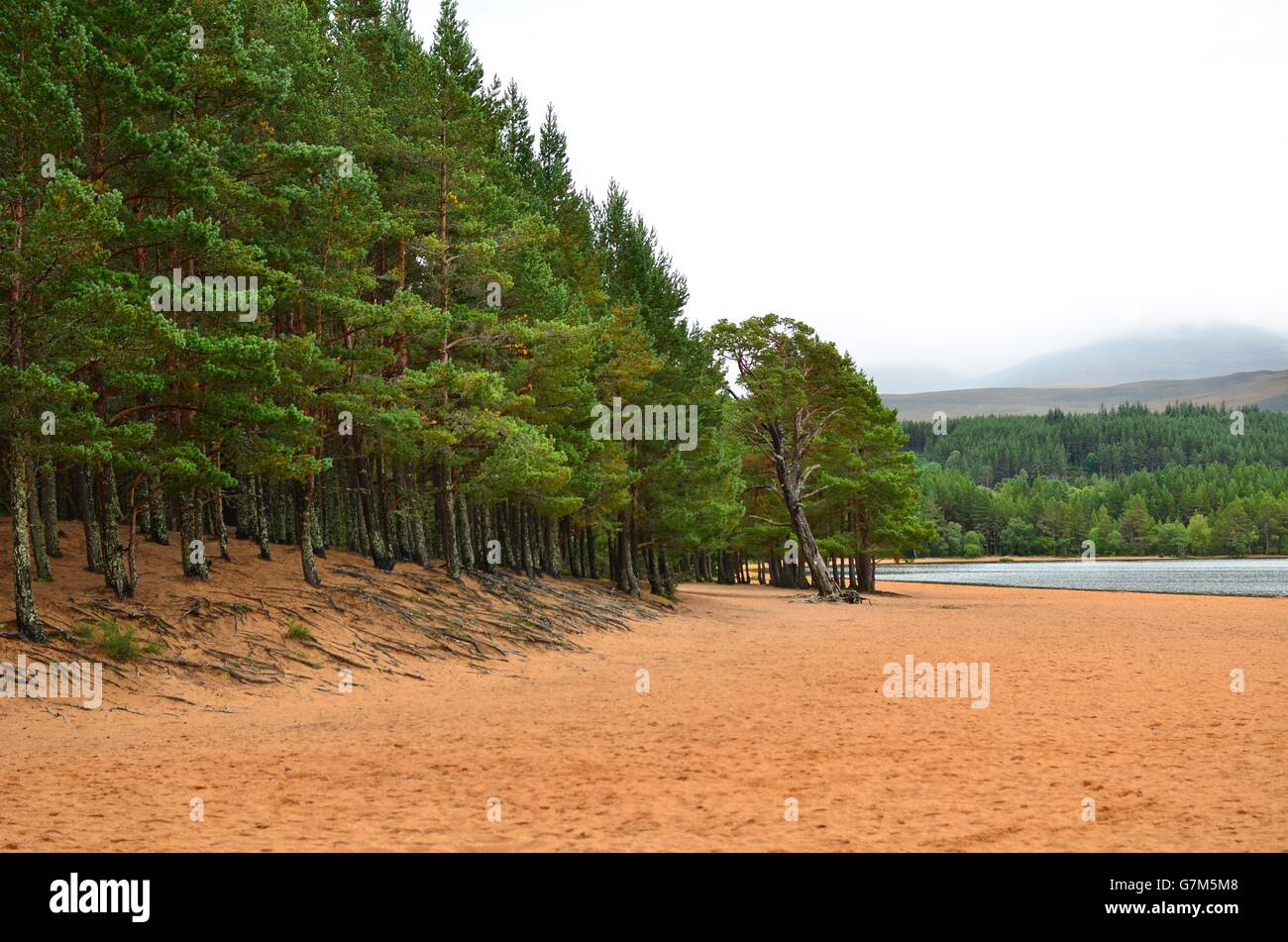 View from the sandy shore on Loch Morlich to Glenmore forest and the Cairngorm plateau, by Aviemore, Scotland UK Stock Photo