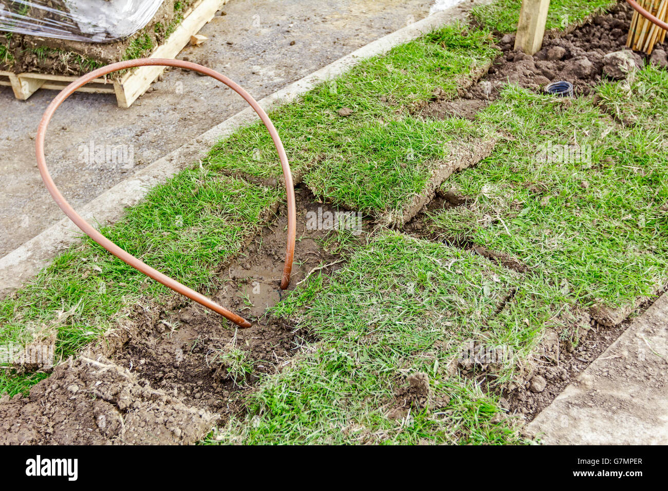 Bended copper pipe is coming out from the ground around grass roots. - Stock Image