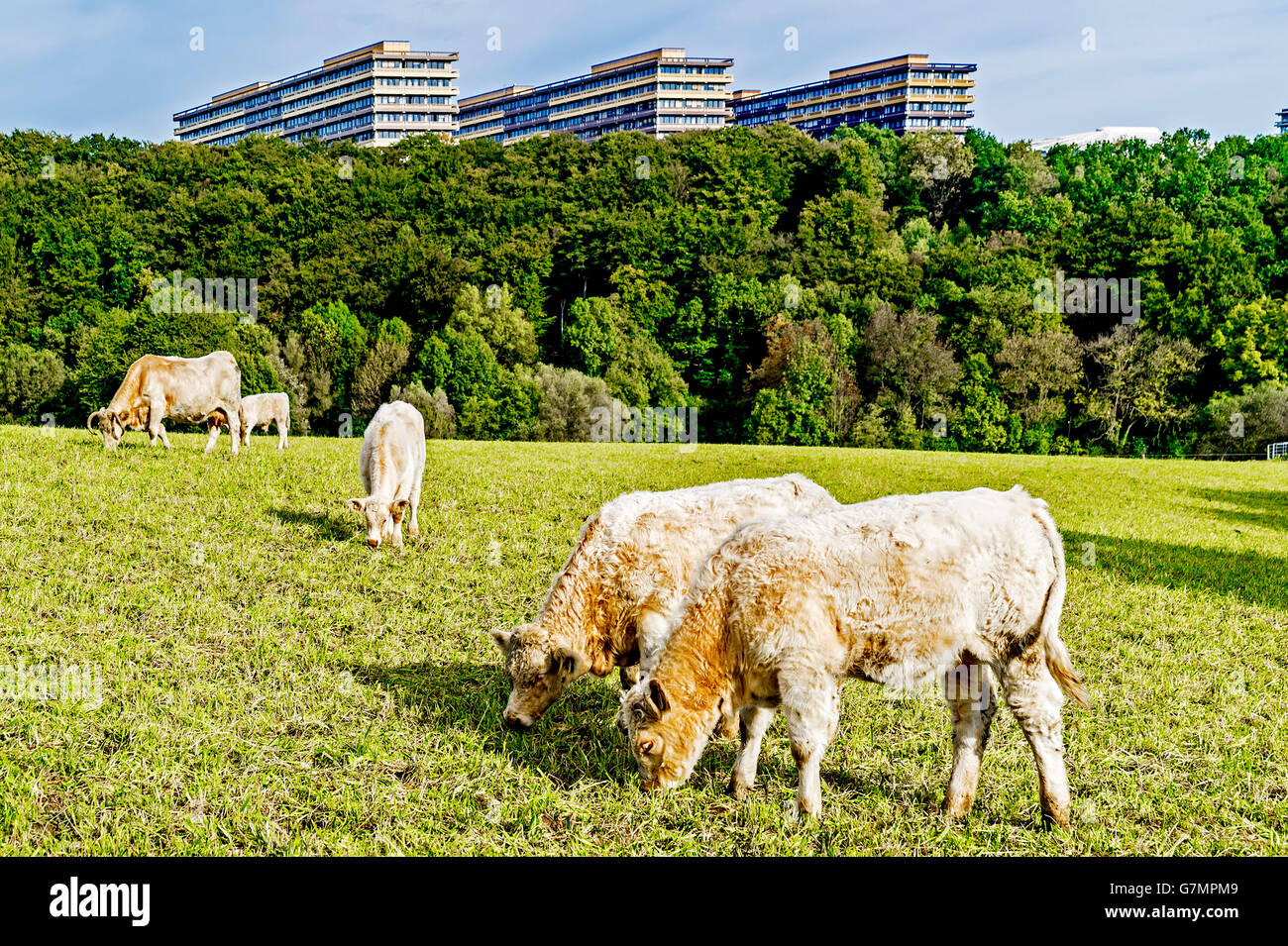 View at the University in Bochum, ruhr area, Germany; Blick auf die Ruhr Universitaet Bochum, vom Süden her Stock Photo