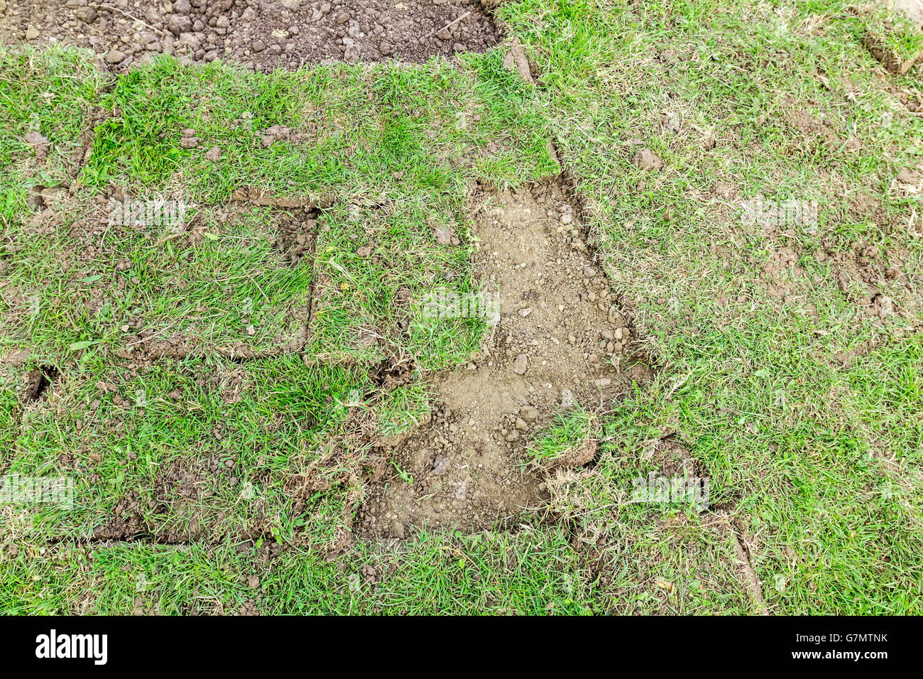 Unrolling grass, applying turf rolls for a new lawn, work in progress. - Stock Image