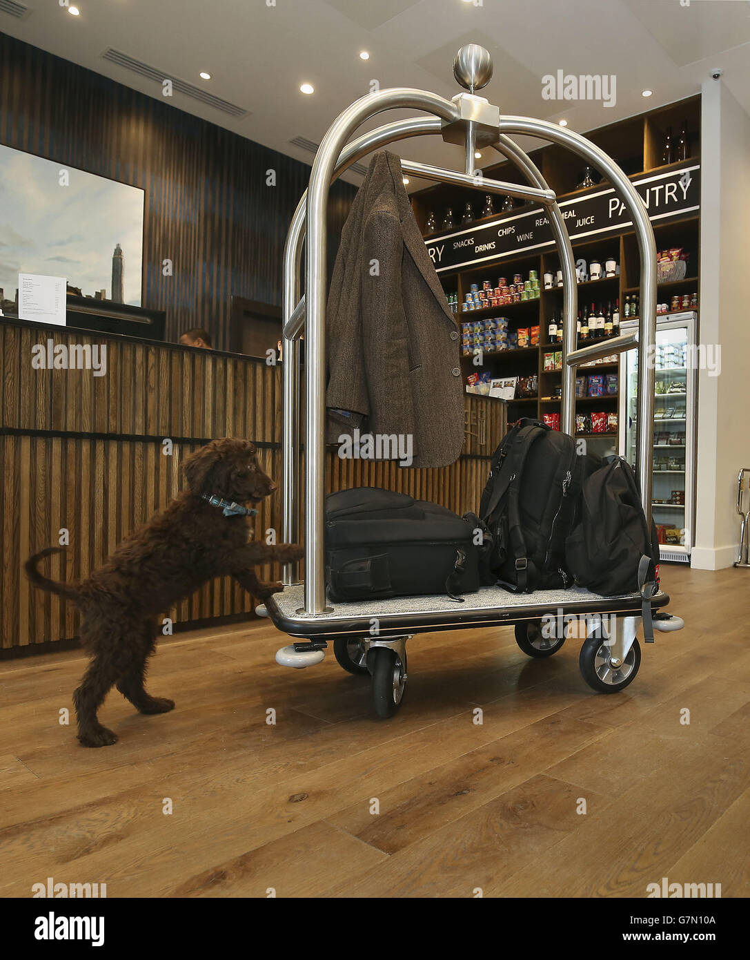 London's first hotel dog - Stock Image