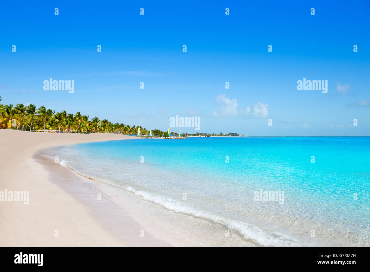 Key west florida Smathers beach palm trees in USA - Stock Image
