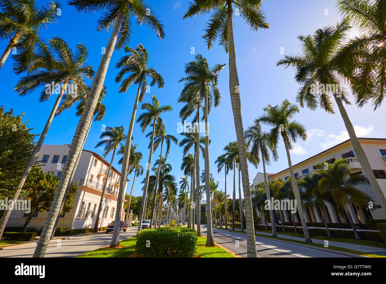 Palm Beach Royal Palm Way In Florida Usa Palm Trees In A Row Stock