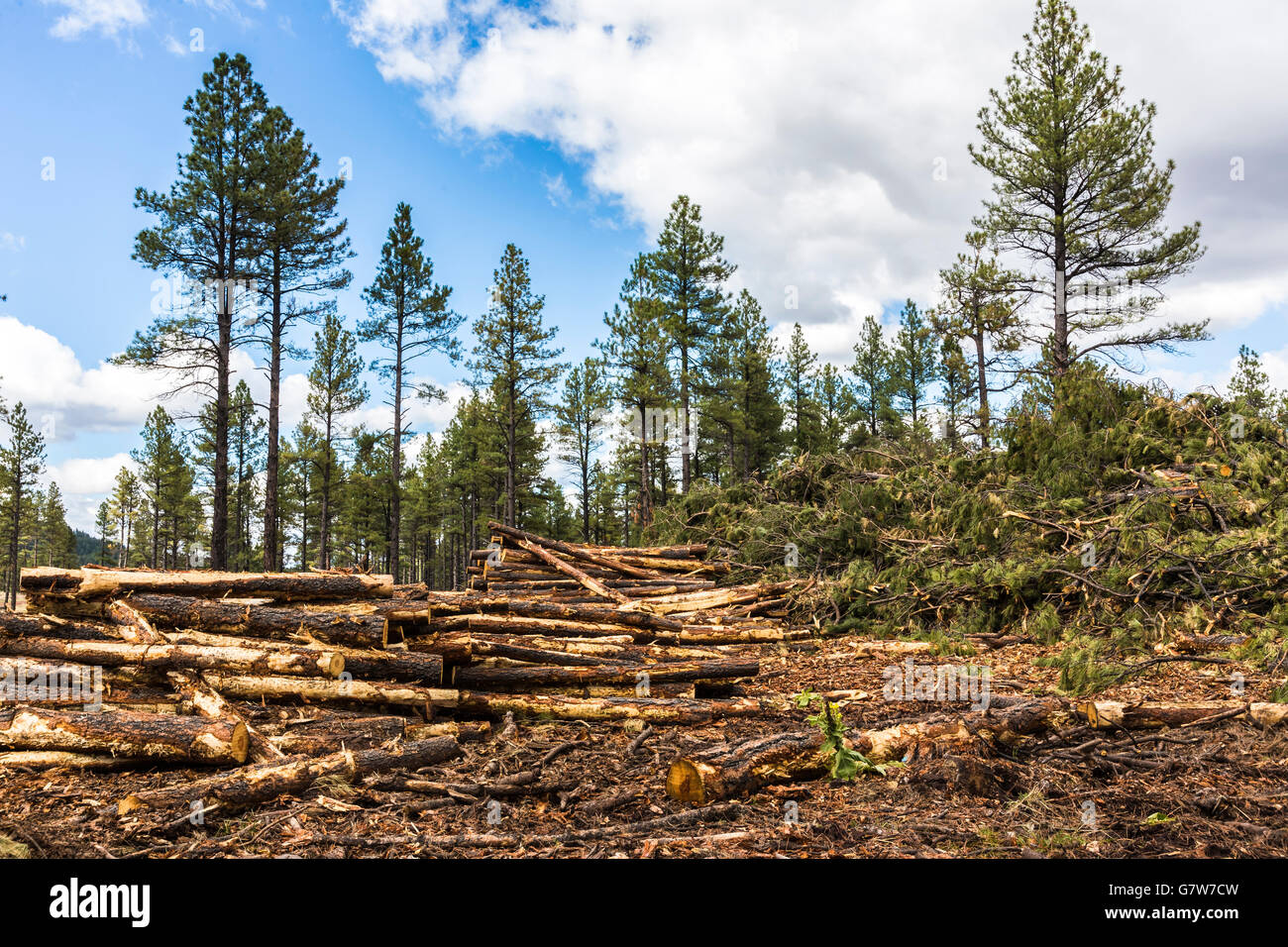an essay on clear cutting of forests Most helpful essay resource ever.