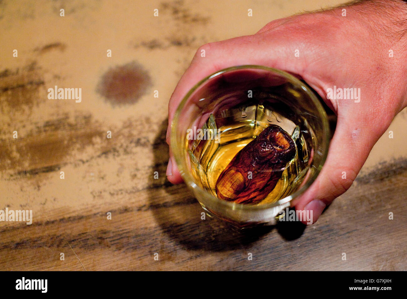 A severed human toe used in Downtown Hotel's famous 'sourtoe cocktail' - a Dawson City tradition. - Stock Image