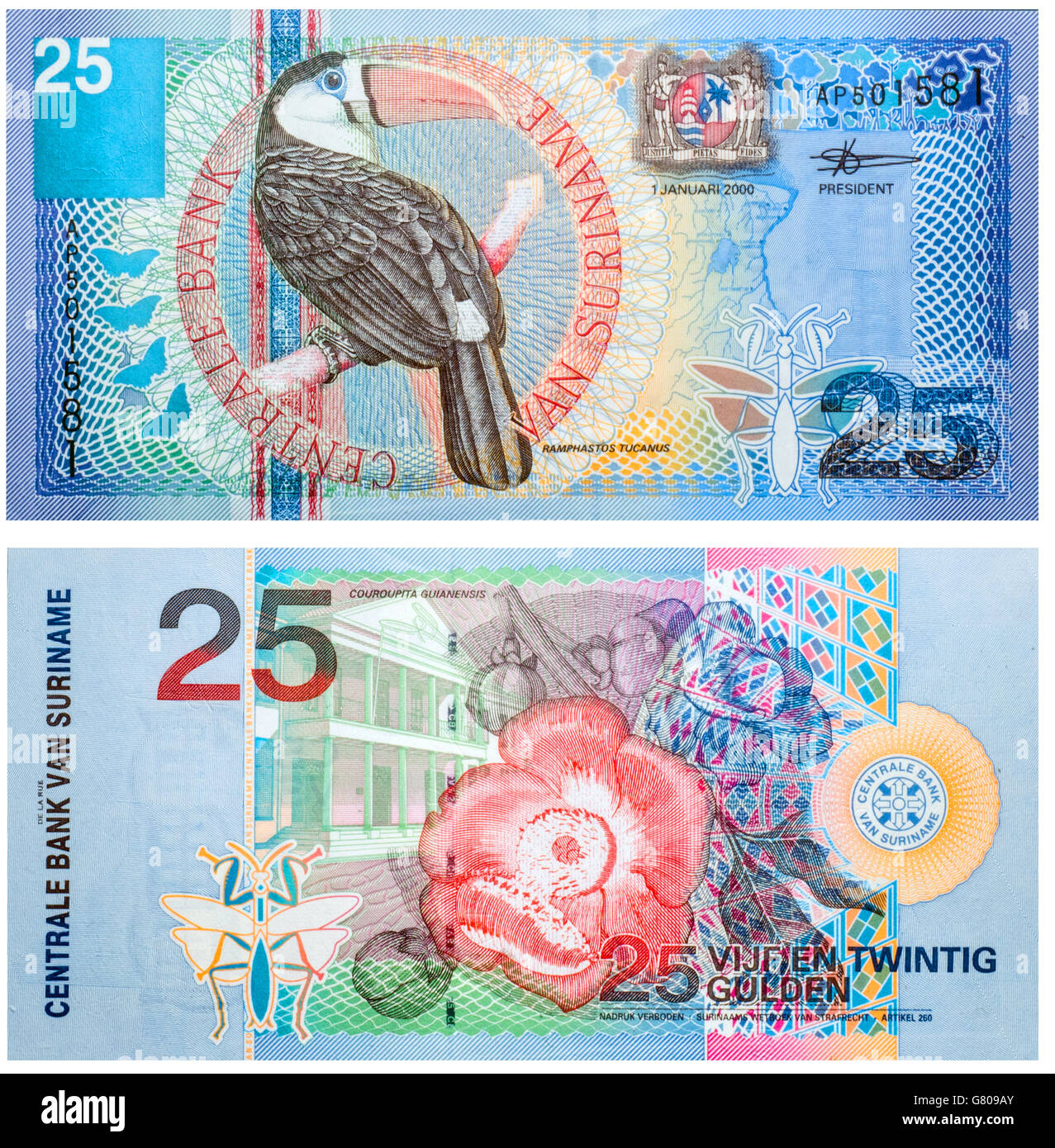 Banknote 25 Gulden Suriname front and back isolated on white emitted on 2000. Red-billed toucan on front and a flower - Stock Image