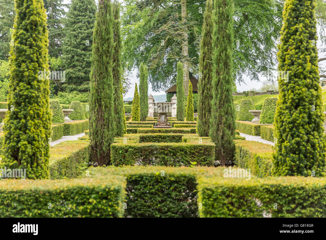 Green symmetry - Stock Image