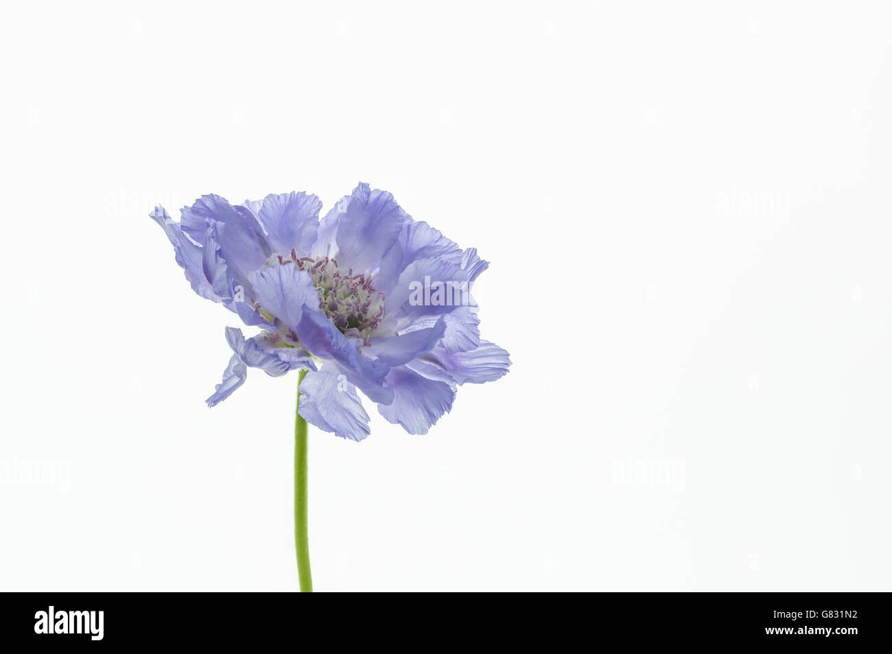 Feeling blue. Stock Photo