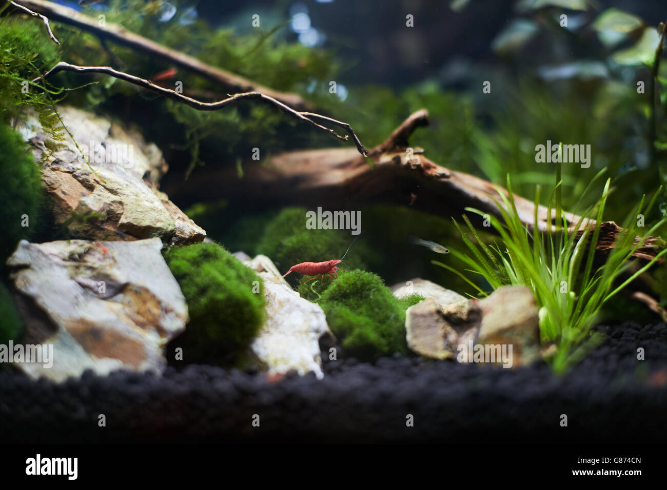 Nano aquarium Stock Photo