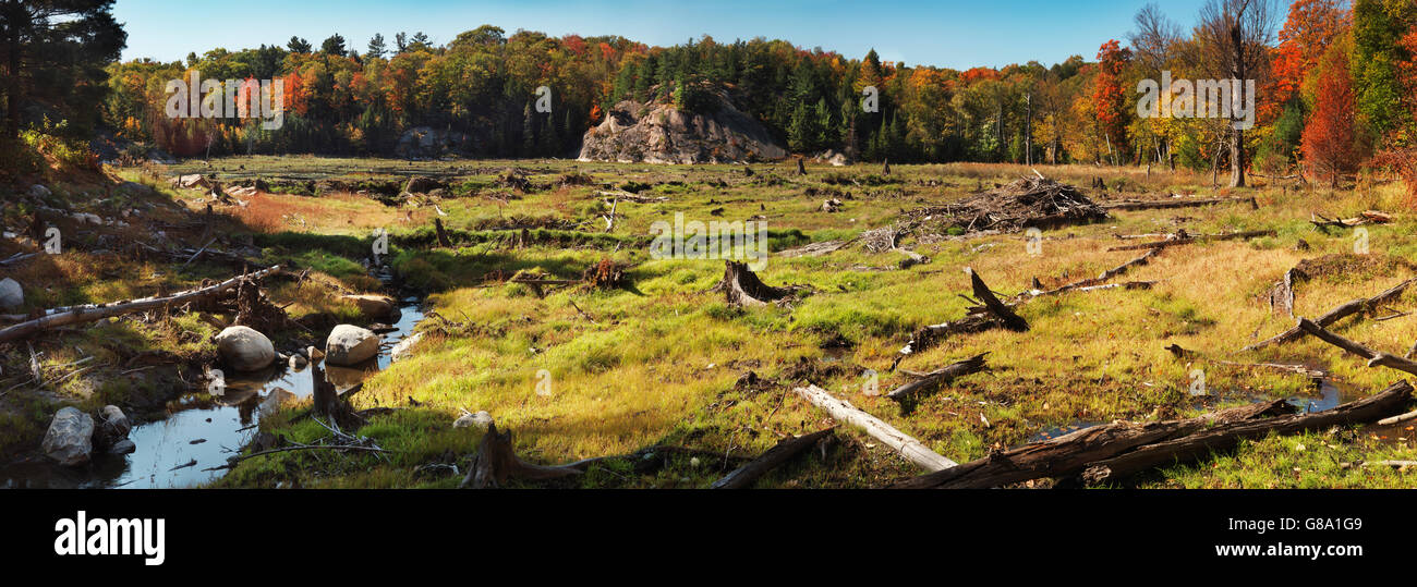 Panoramic view of a drained beaver pond after a beaver dam was removed, Killarney Provincial Park, Ontario, Canada - Stock Image