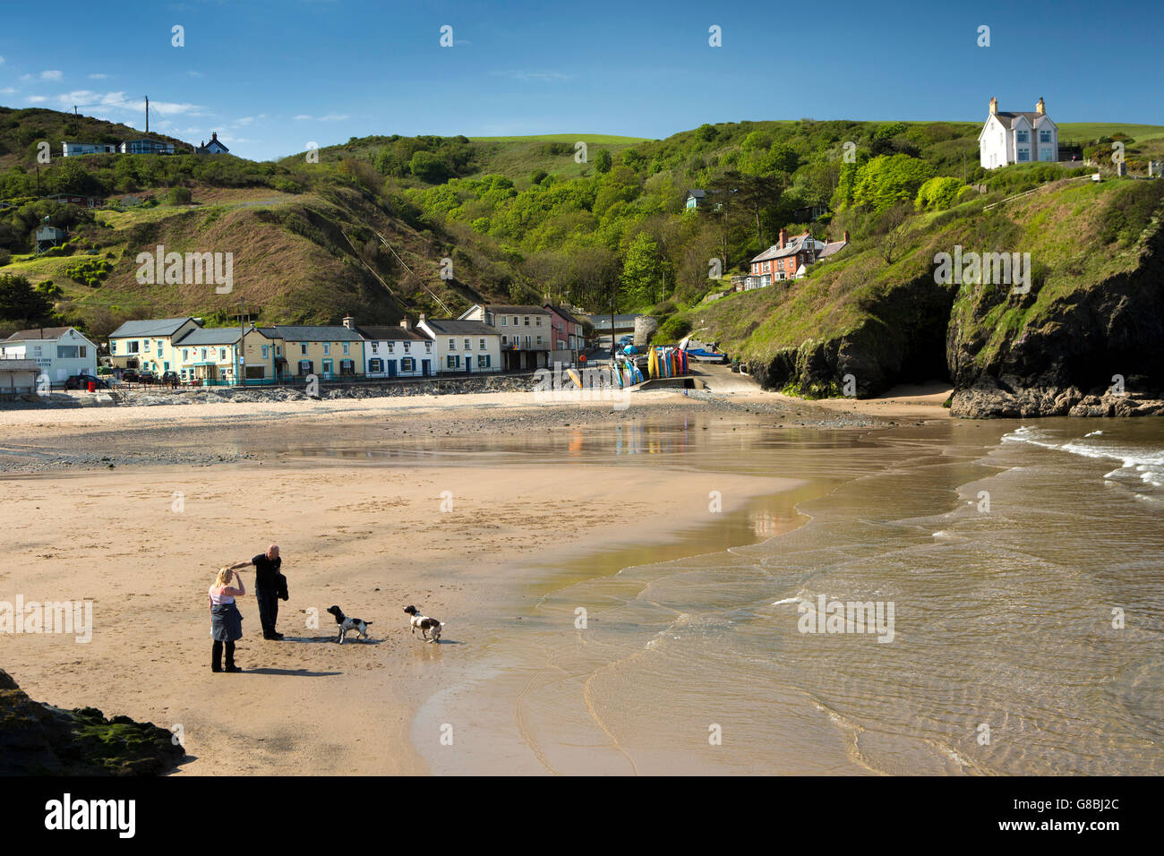 UK, Wales, Ceredigion, Llangrannog, beach, early morning, couple with dogs - Stock Image