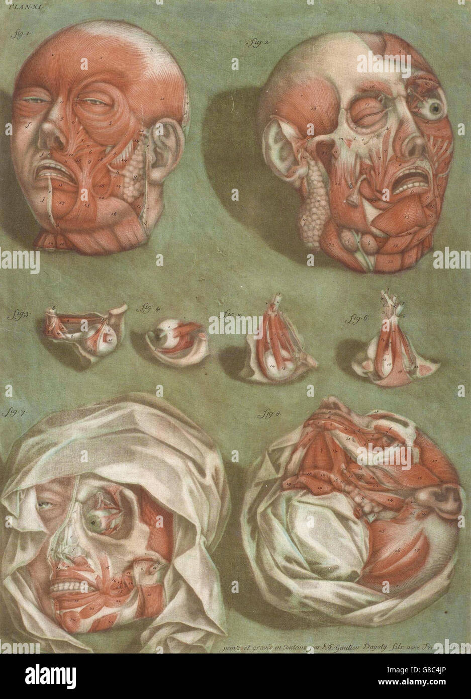 Arnaud-Éloi Gautier-Dagoty - Plate 11, Studies of Heads and Eyes - Stock Image