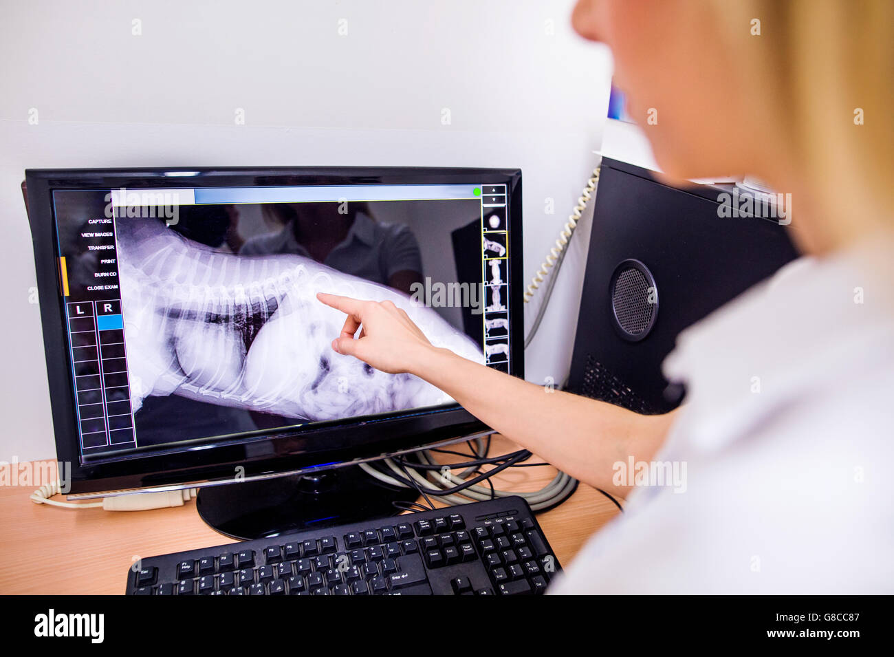 Female Veterinary Surgeon Examining X Ray of a dog. - Stock Image