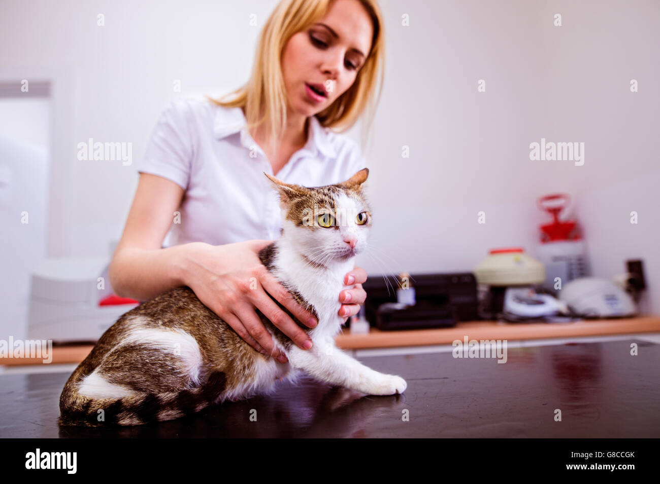 Young blond veterinarian holding little sick cat. Veterinary cli - Stock Image