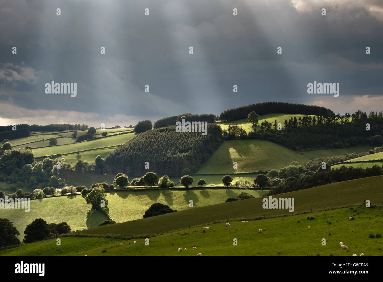 Near Knighton, Powys, UK, on the border between England and Wales. Beams of sunlight breaking through dark stormclouds - Stock Image