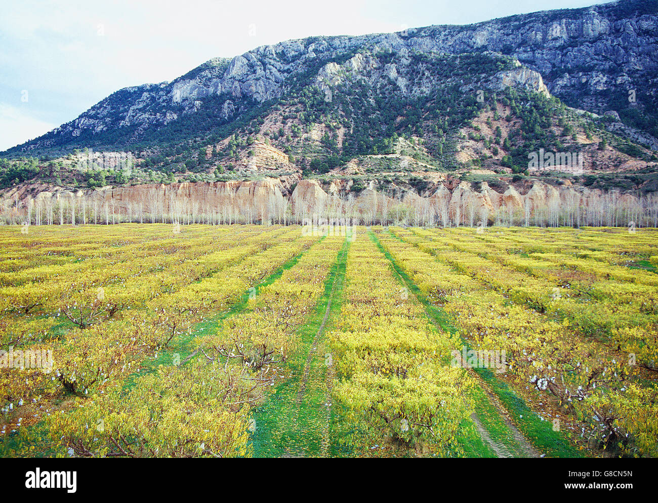 Fruit trees and canyon of river Martin. River Martin Cultural Park, Sierra de Arcos, Teruel province, Aragon, Spain. - Stock Image