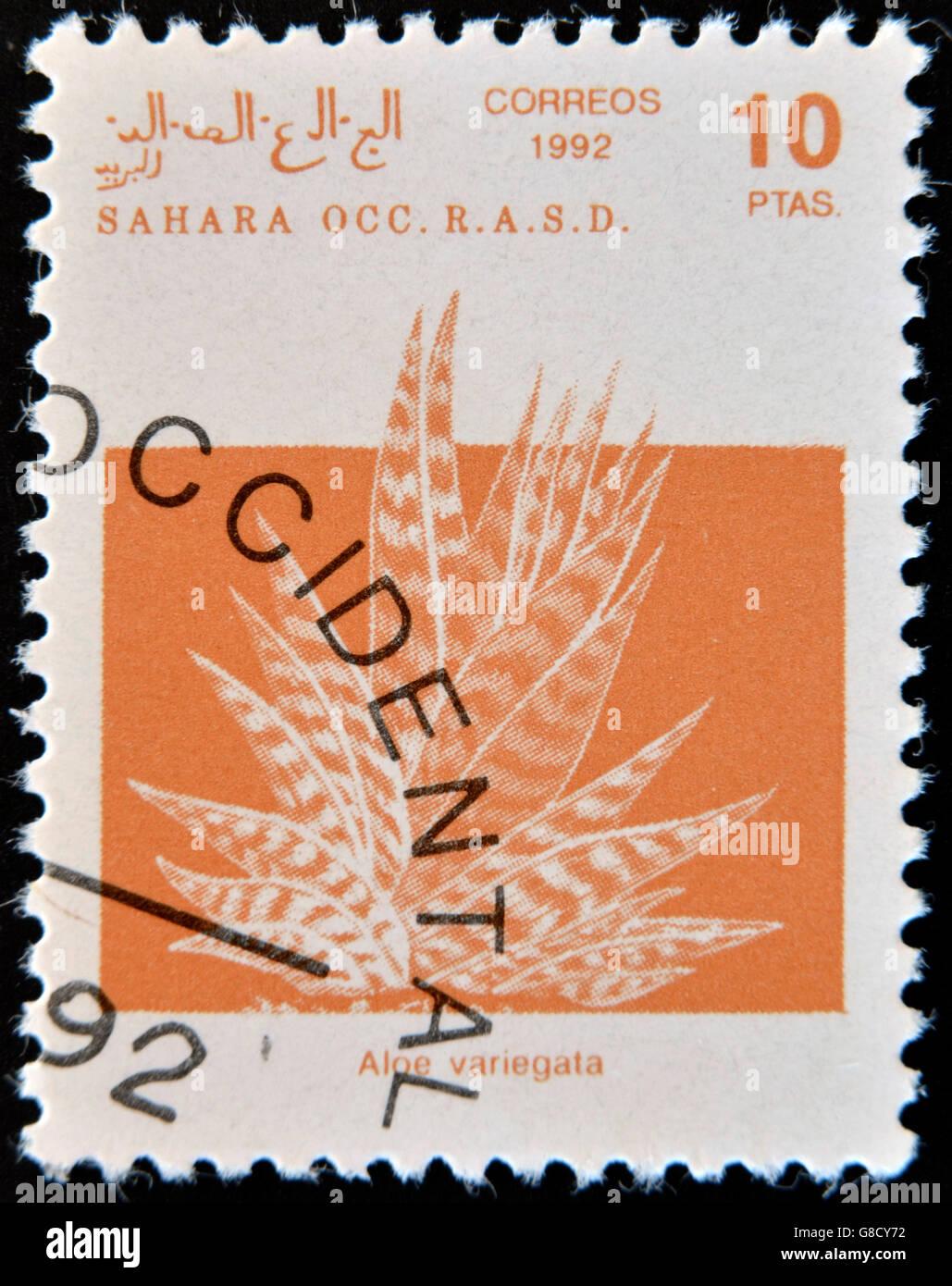 SAHARA - CIRCA 1992: A stamp printed in Sahrawi Arab Democratic Republic (SADR), depicted Aloe variegata, circa - Stock Image