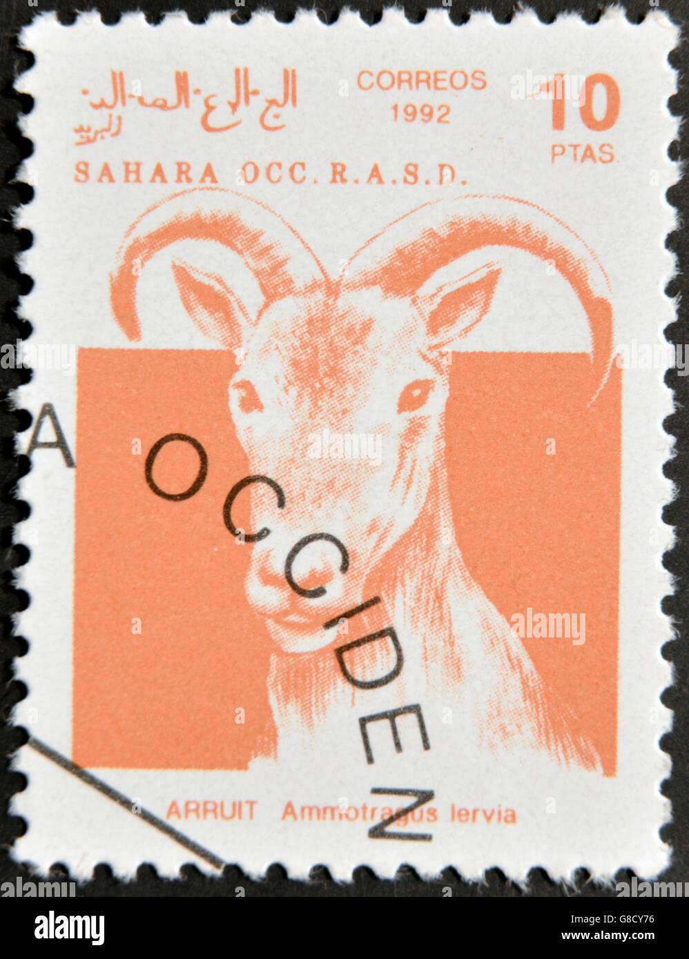 SAHARA - CIRCA 1992: A stamp printed in Sahrawi Arab Democratic Republic (SADR), shows a Scimitar Arruit (ammotragus - Stock Image