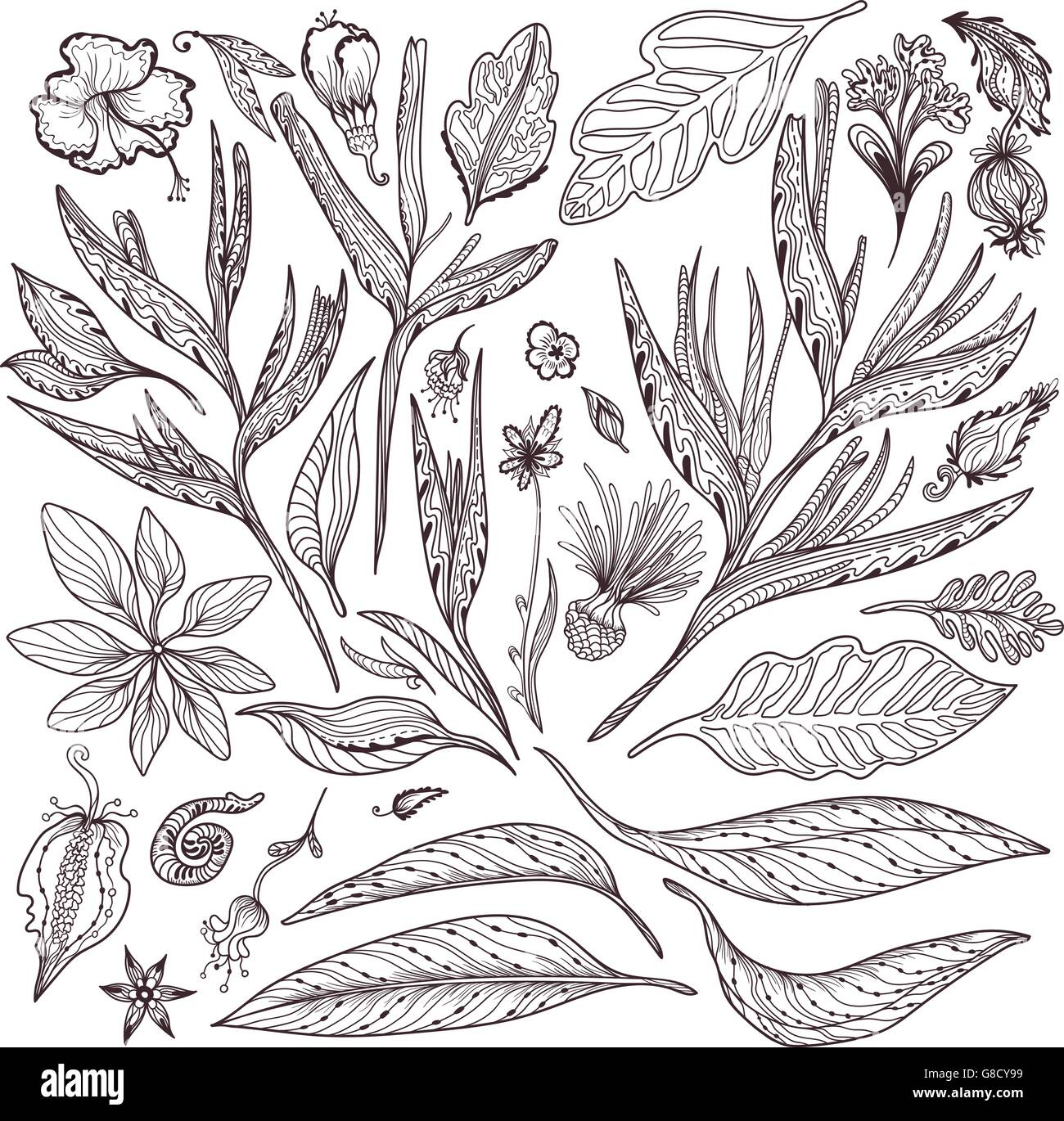 Collection of indian thai leaves and flowers in sketch outline doodle style on white background