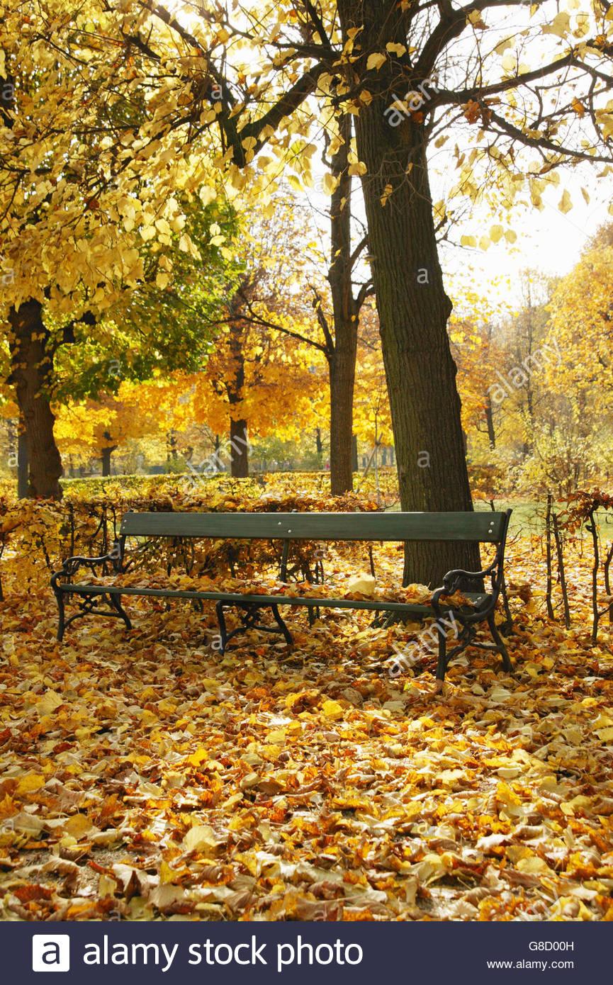 Detail view of a park bench, Park of Schoenbrunn castle in autumn, Vienna, Austria - Stock Image