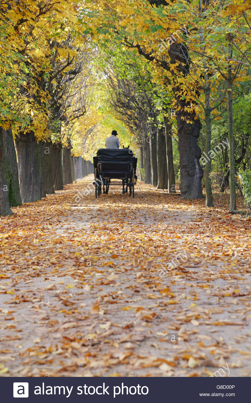 Detail view of a carriage driving through the Park of Schoenbrunn castle in autumn, Vienna, Austria - Stock Image