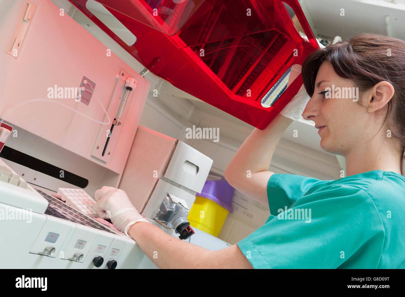 Veterinary nurse using diagnostics equipment. England. UK - Stock Image