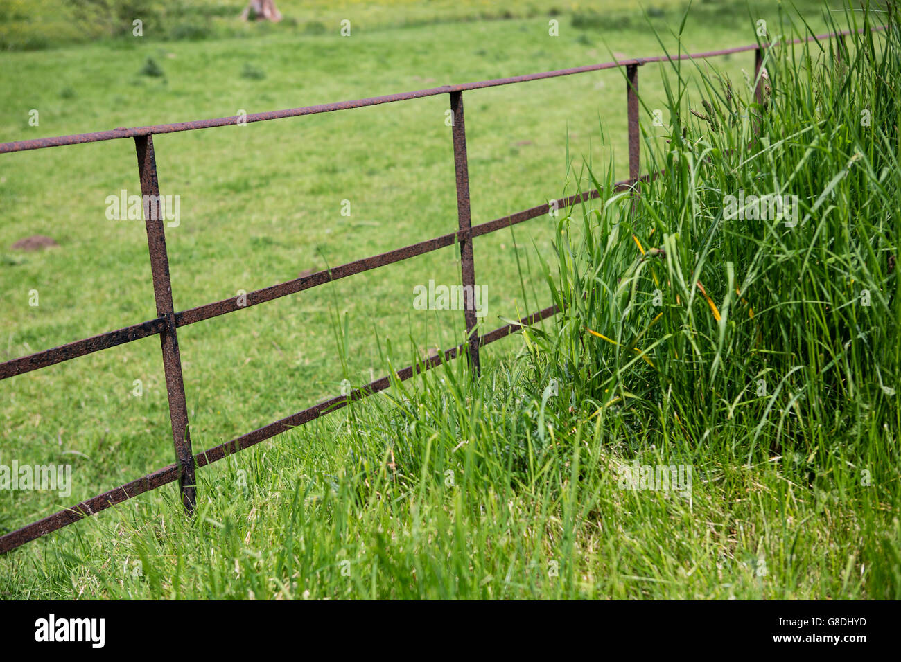 An old rusty weatherd iron fence on the edge of lush green pastureland. - Stock Image