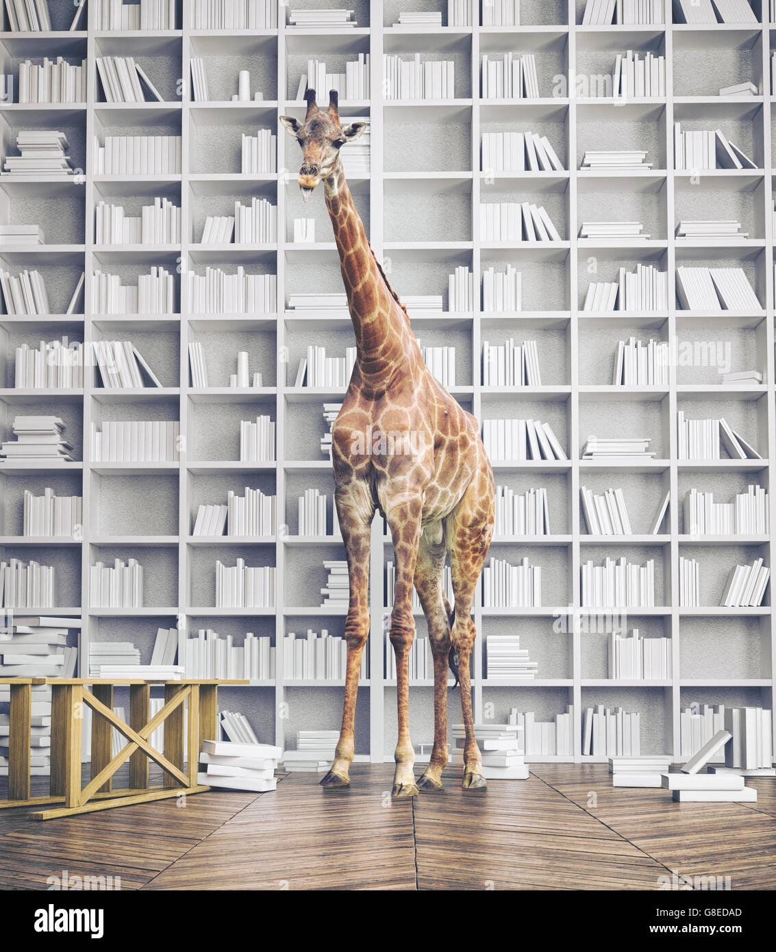giraffe in the room with book shelves. Creative photo combination concept - Stock Image
